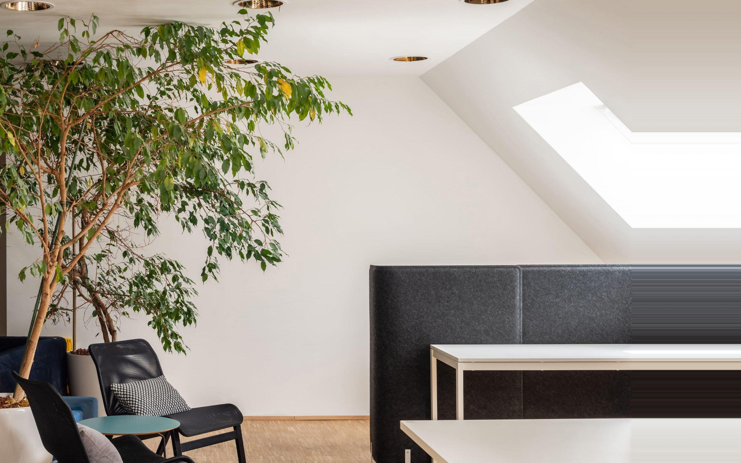 Zwei Stühle unter einer Palma in unserer Digital Agentur um jeden Kontakt und Kunden zu empfangen