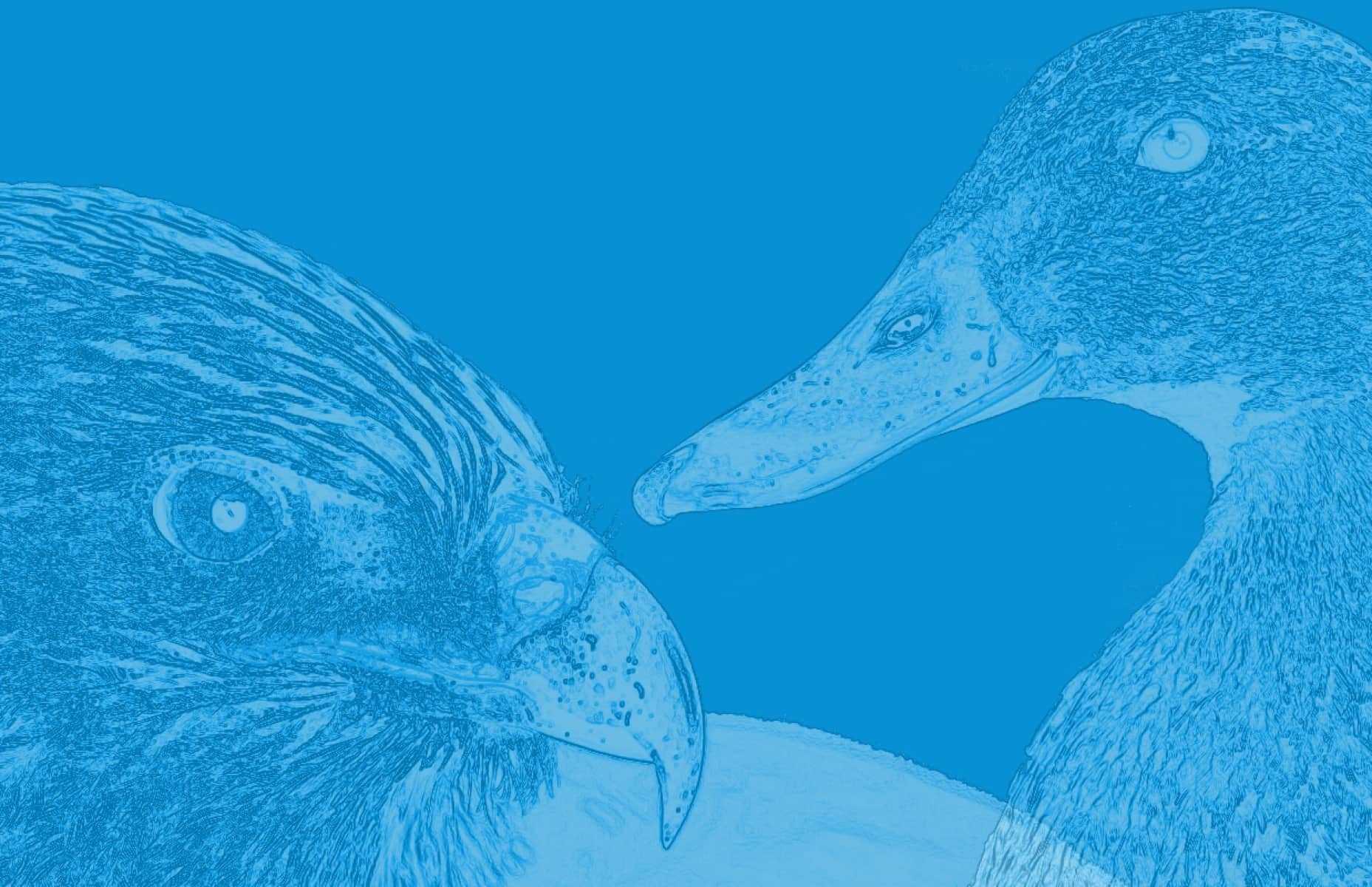 Digitalsunray beschreibt mit einem Adler und einer Ente wieso Digitalsunray ein guter Arbeitgeber ist